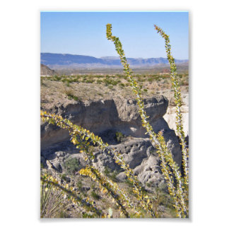 Tuff Canyon & Ocotillo, Big Bend National Park Photographic Print
