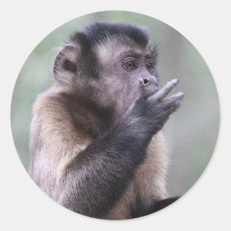 Tufted Capuchin Monkey Photo Round Sticker