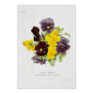 Tufted Pansies Poster