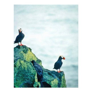 Tufted Puffins 21.5 Cm X 28 Cm Flyer
