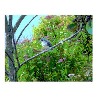 Tufted Titmouse Fledgling Baby Bird Postcard