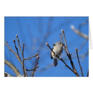 Tufted Titmouse Greeting Card, Blank Inside Card