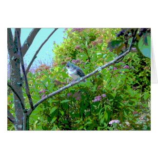 Tufted Titmouse: Newly Fledged Baby Bird Cards