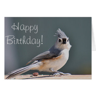 Tufted titmouse photo card