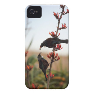 Tui birds on New Zealand flax Case-Mate iPhone 4 Cases