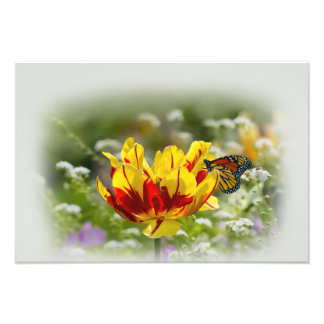 Tulip and Butterfly Photo Print