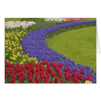 Tulip and Grape Hyacinth and daffodil garden, Card