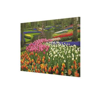 Tulip and hyacinth garden, Keukenhof Gardens, Canvas Prints