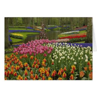 Tulip and hyacinth garden, Keukenhof Gardens, Card