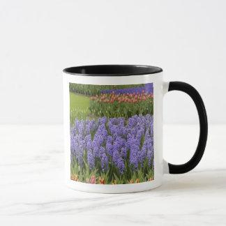 Tulip and Hyacinth garden, Keukenhof Gardens, Mug