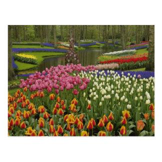 Tulip and hyacinth garden, Keukenhof Gardens, Postcard