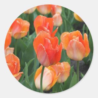 Tulip Classic Round Sticker