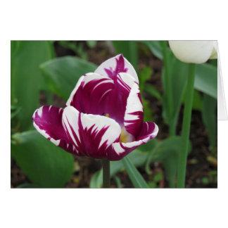 Tulip Delight Note Card