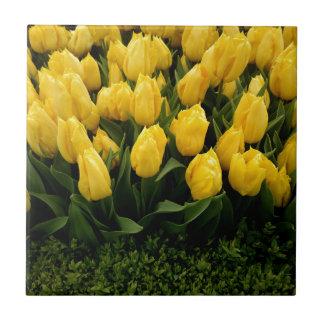Tulip Festival - 27 Tile