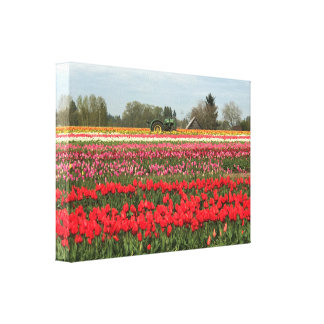 Tulip Field with Tractor and Barn Canvas Print