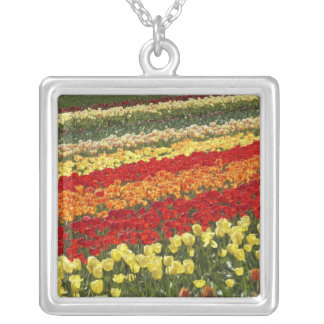 Tulip Fields, near Tapanui, West Otago, South Square Pendant Necklace