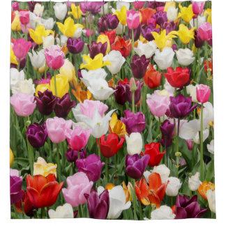 Tulip Fields Shower Curtain