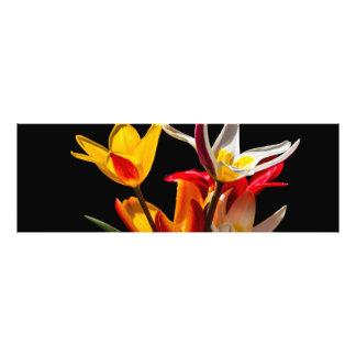 Tulip flowers against black background art photo