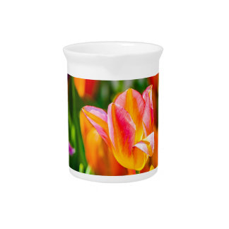 Tulip flowers of different colors drink pitcher