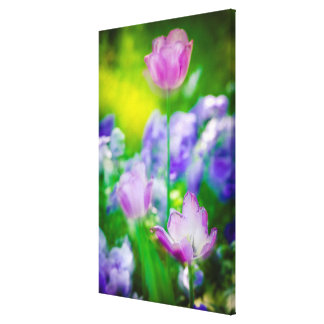 Tulip garden, Giverny, France Canvas Print