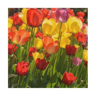 Tulip Garden in the Spring Wood Wall Art