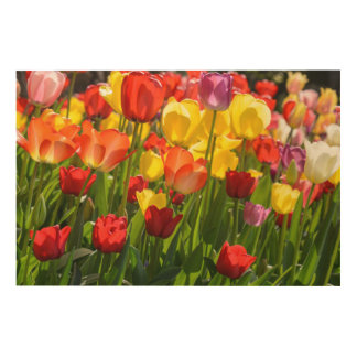 Tulip Garden in the Spring Wood Wall Decor
