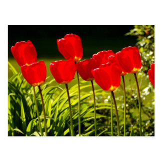 tulip impressions postcard