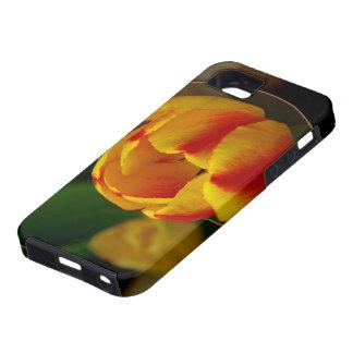 Tulip iPhone 5 Cover