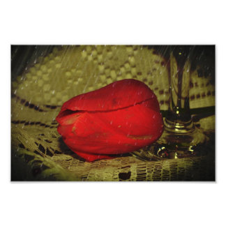 tulip on lace with wine glass art photo