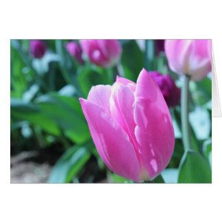 Tulip Perfection Card