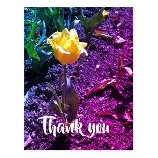 Tulip Thank you postcard