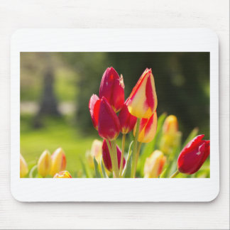 Tulip Tiptoe Time Mouse Pad