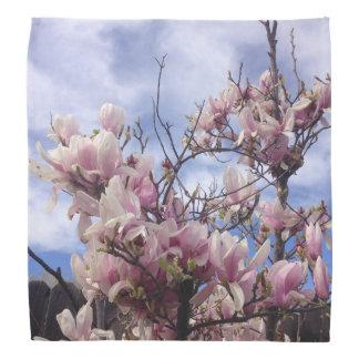 Tulip Tree Flowers. Magnolia soulangeana Bandana