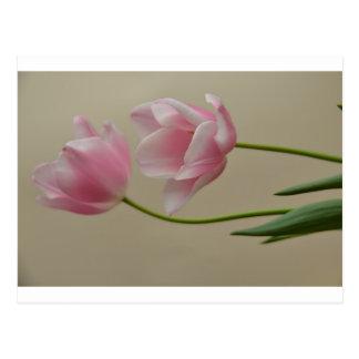 Tulip tulip postcard