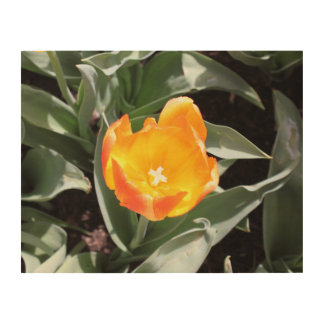 Tulip Wood Wall Art