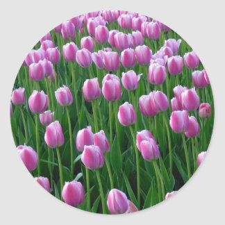 Tulips 14 Sticker