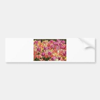 Tulips #2 bumper sticker