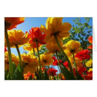 Tulips 8 Blank Greeting Card