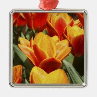 Tulips abound in Keukenhof Gardens, Holland. Silver-Colored Square Decoration