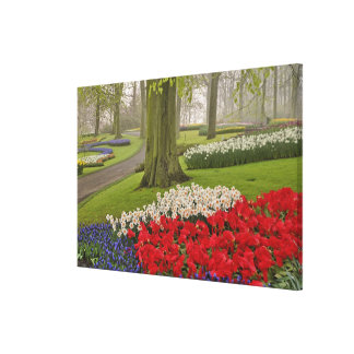 Tulips and daffodils, Keukenhof Gardens, Stretched Canvas Print