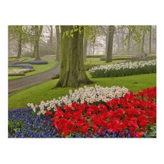 Tulips and daffodils, Keukenhof Gardens, Postcard