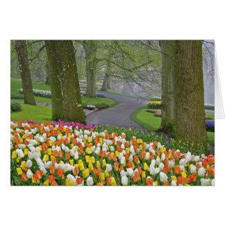 Tulips and roadway Keukenhof Gardens Lisse Cards