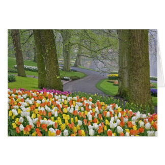 Tulips and roadway, Keukenhof Gardens, Lisse, Greeting Card