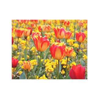 Tulips, Bright and colorful yellow and red Canvas Print
