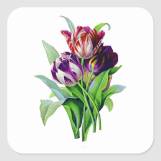 Tulips by Pierre Joseph Redoute Square Sticker