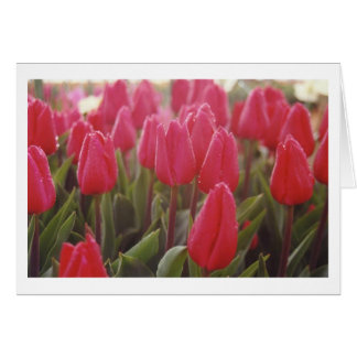 Tulips Cards