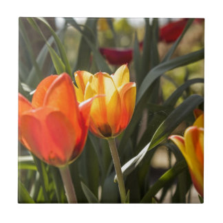 Tulips Ceramic Tile