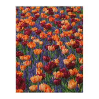 Tulips Colour Burst Wood Wall Art