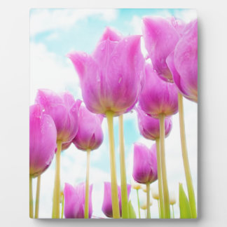 tulips display plaques