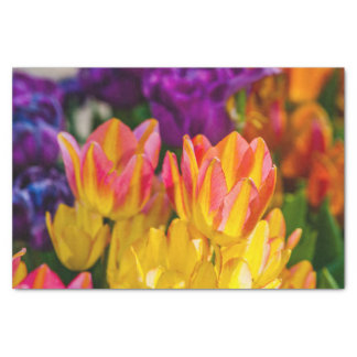 Tulips Enchanting 16 Tissue Paper